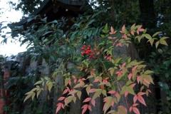 少し紅葉が残った南天の木