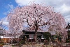 本山本満寺