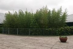 建物の中央からつき出る竹林