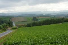 美瑛の田園風景