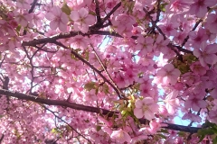 とにかくかわいいピンク