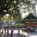 | 平野神社 | Hirano Shrine