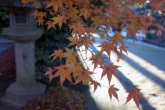 今が旬の紅葉
