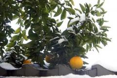 屋根の上の雪とみかん