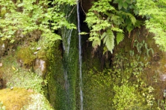 お庭に流れる小さい滝