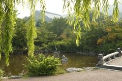 円山公園のアオサギ