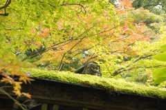 色好き始めの木々