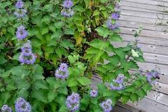 小道に沿って咲いていた花