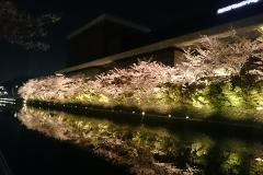 水面に映った桜も素敵
