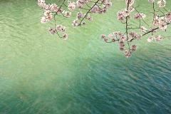 疏水の色がきれい