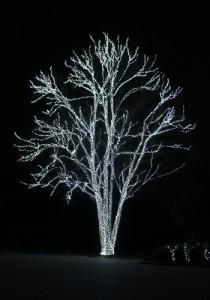 シルバーに輝く木